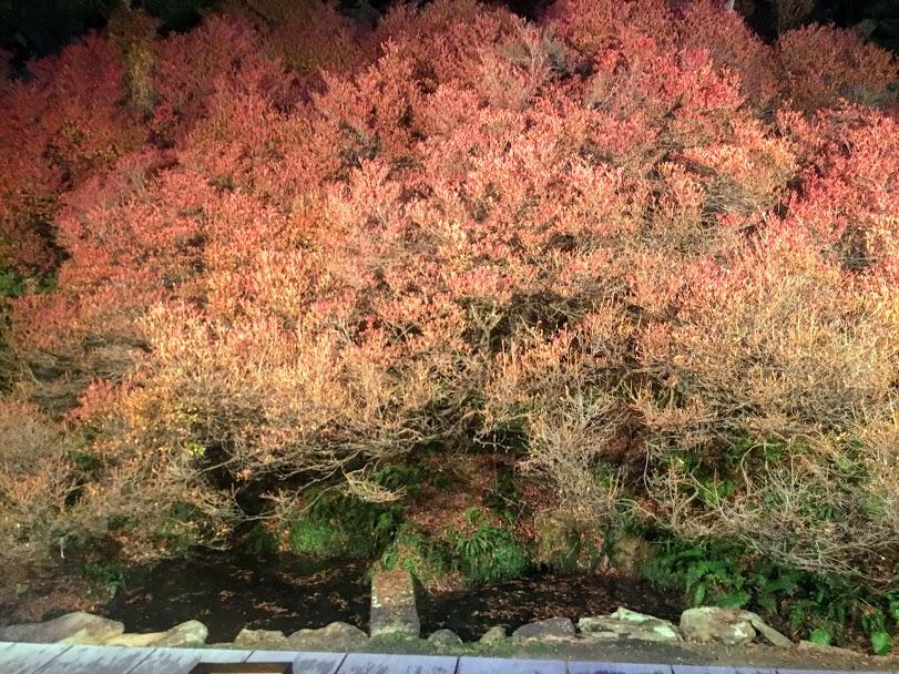 紅葉を見に、豊岡の安国寺へ