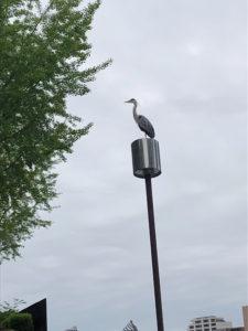 行列を見守る鳥